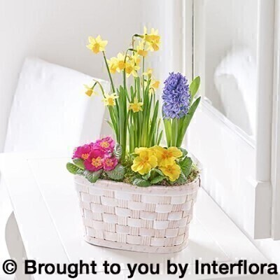 Spring Planted Basket: Booker Flowers and Gifts